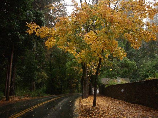 fall path