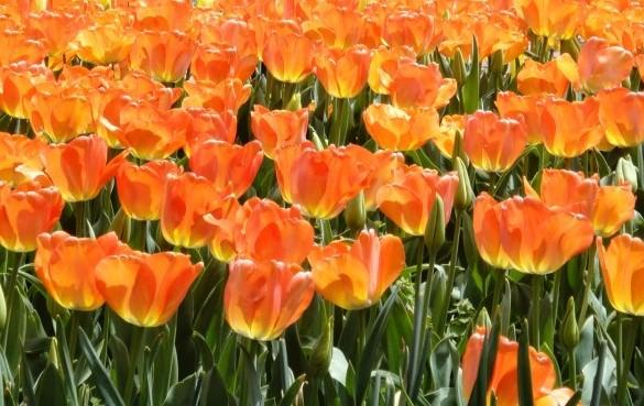 orange1 (2)