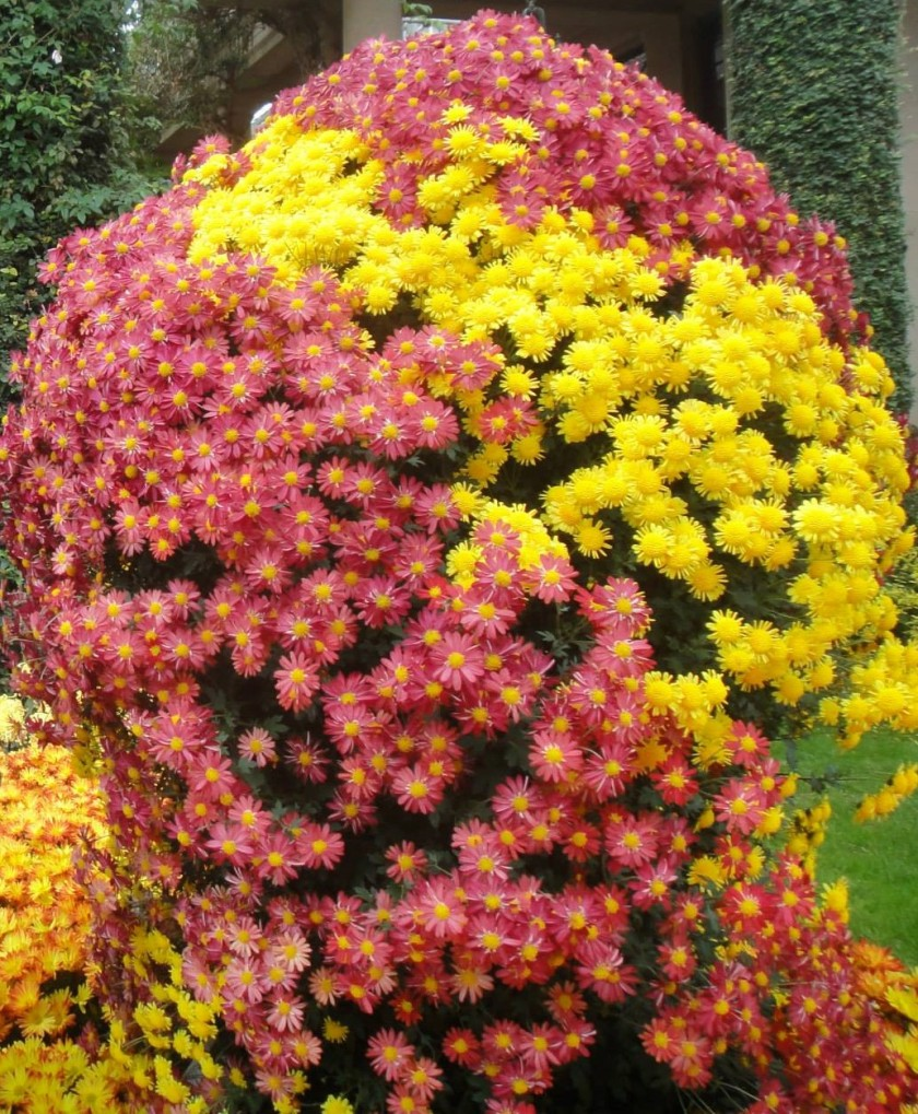 floral (2)