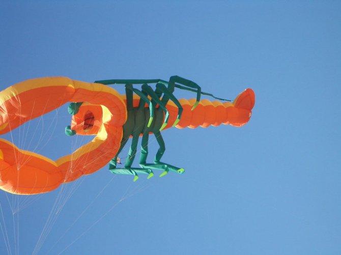 kite scorpion