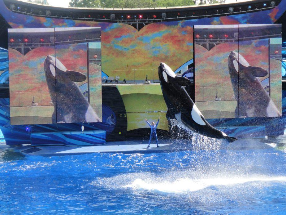 shamu the whale