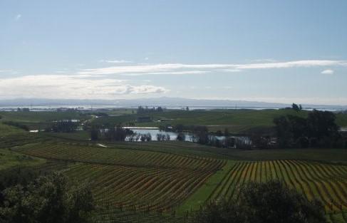 vineyard 2 (2)
