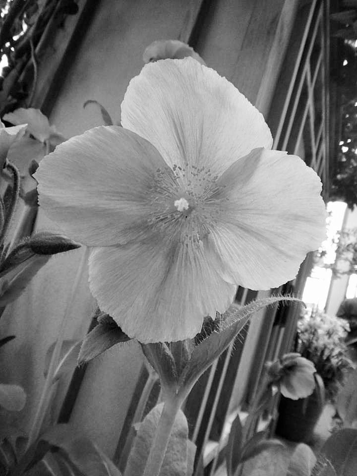 blue flower (2)