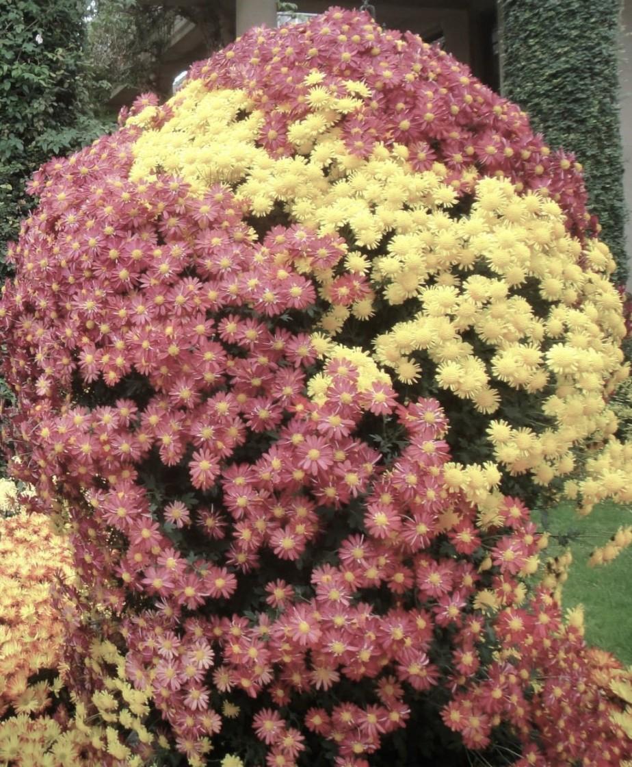 floral (3)
