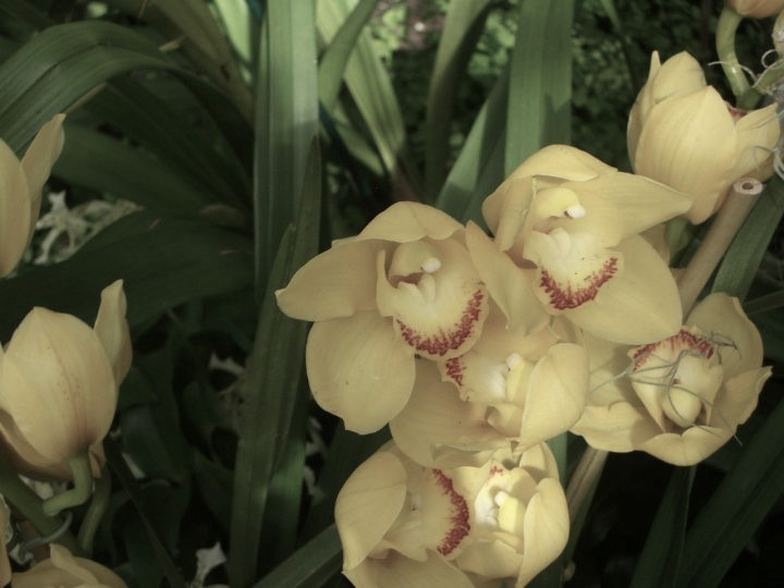 orchid 5 (2)