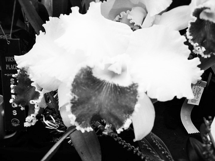 orchid1 (2)