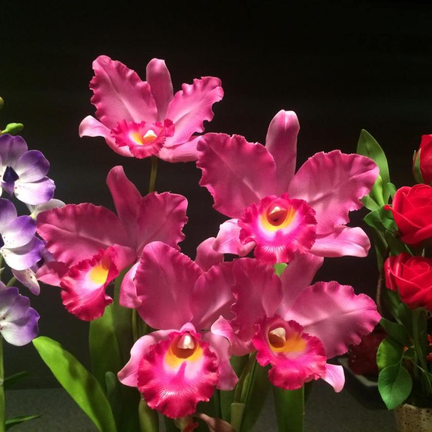 pink wax orchids