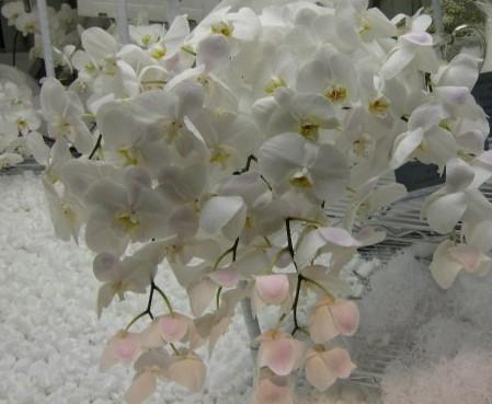 white flowers (2)
